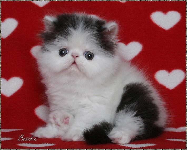 kitten54.jpg