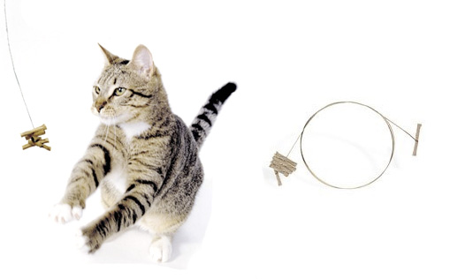 catdancer.jpg