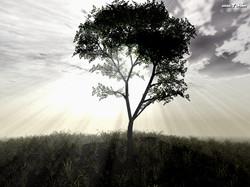 3d-landscape-103_6699.jpg