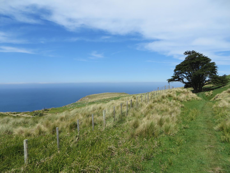Otago Penninsula, New Zealand
