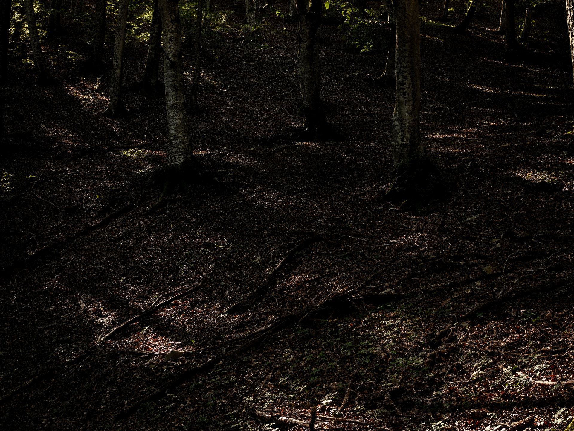 In this beech forest the Germans built a camp during the Second World War. They fled when were overwhelmed by the Americans. Many fragments of American mortar shards can still be found because of the attacks coming from the other side of the hill.