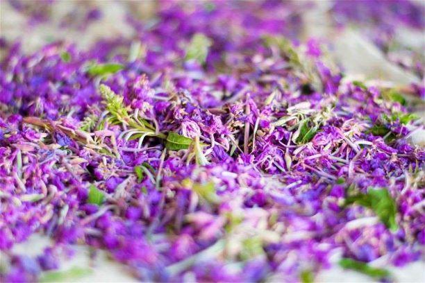 цветы иван-чая польза
