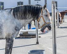 cheval baille.jpg