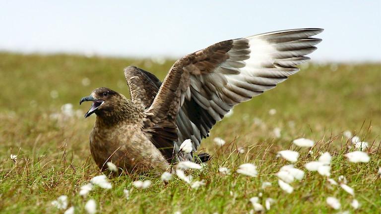 Shetland Wildlife