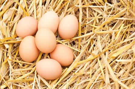 Eggs! Cage-Free, Free-Range or Pasture-Raised?