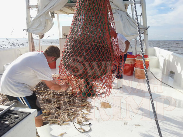 Captain Mike and Michael pouring the catch onto deck of the Daddy's Boy