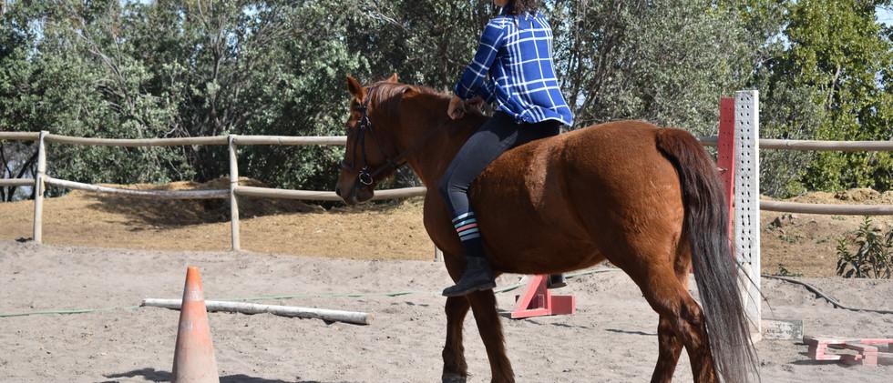 Descubriendo nuevas conexiones con el caballo