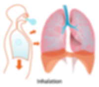 lungs-41562_960_720.png
