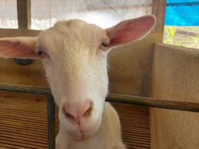 Vale das Cabras - Turismo Rural - Vassouras - RJ