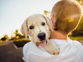 Hotéis Pet Friendly com Crianças - Minas Gerais