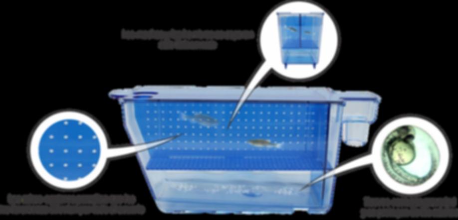 criadeira zebrafish esp.png