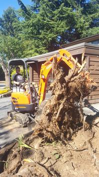 Crush Excavation Job