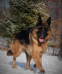 Reba in our forest - German Shepherd pup
