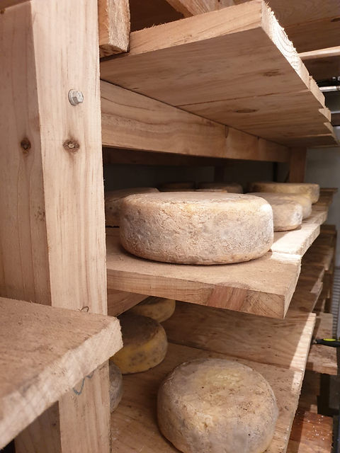 le_petit_fero_fromage_fermier_de_vache_des_pyrenees