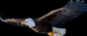 Bald-Eagle-PNG-File.png