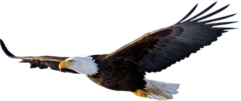 Bald-Eagle-PNG-File.png