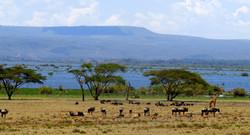 Lake-Naivasha dfd