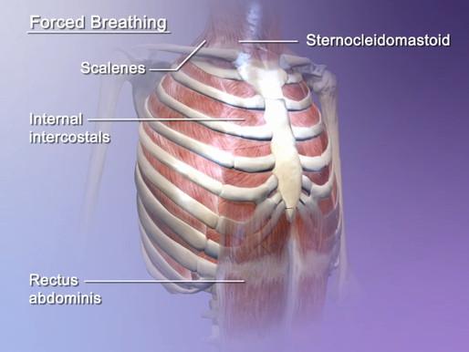 Sapevi che la respirazione può influire con il tuo dolore e la formazione di Trigger Points? Scopri