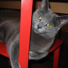 Ellie, 2006
