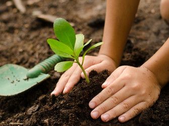 wwac-tree-planting-kid-hands.jpg