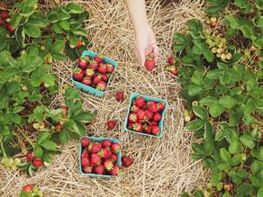 Organic farming explained