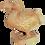 Thumbnail: Dodo sur socle
