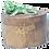 Thumbnail: Boite couvercle pivotant avec iguane