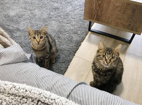 Otis and Milo.jpg