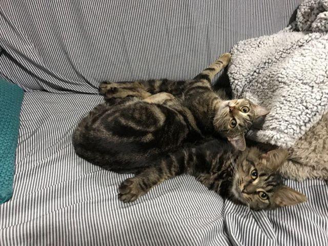 Otis and Milo