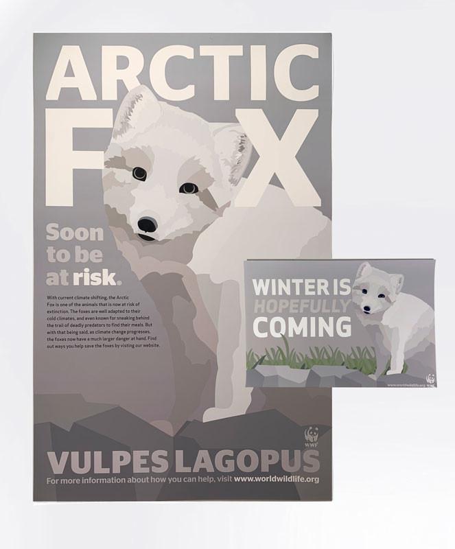 Arctic Fox, Rowan Vogel