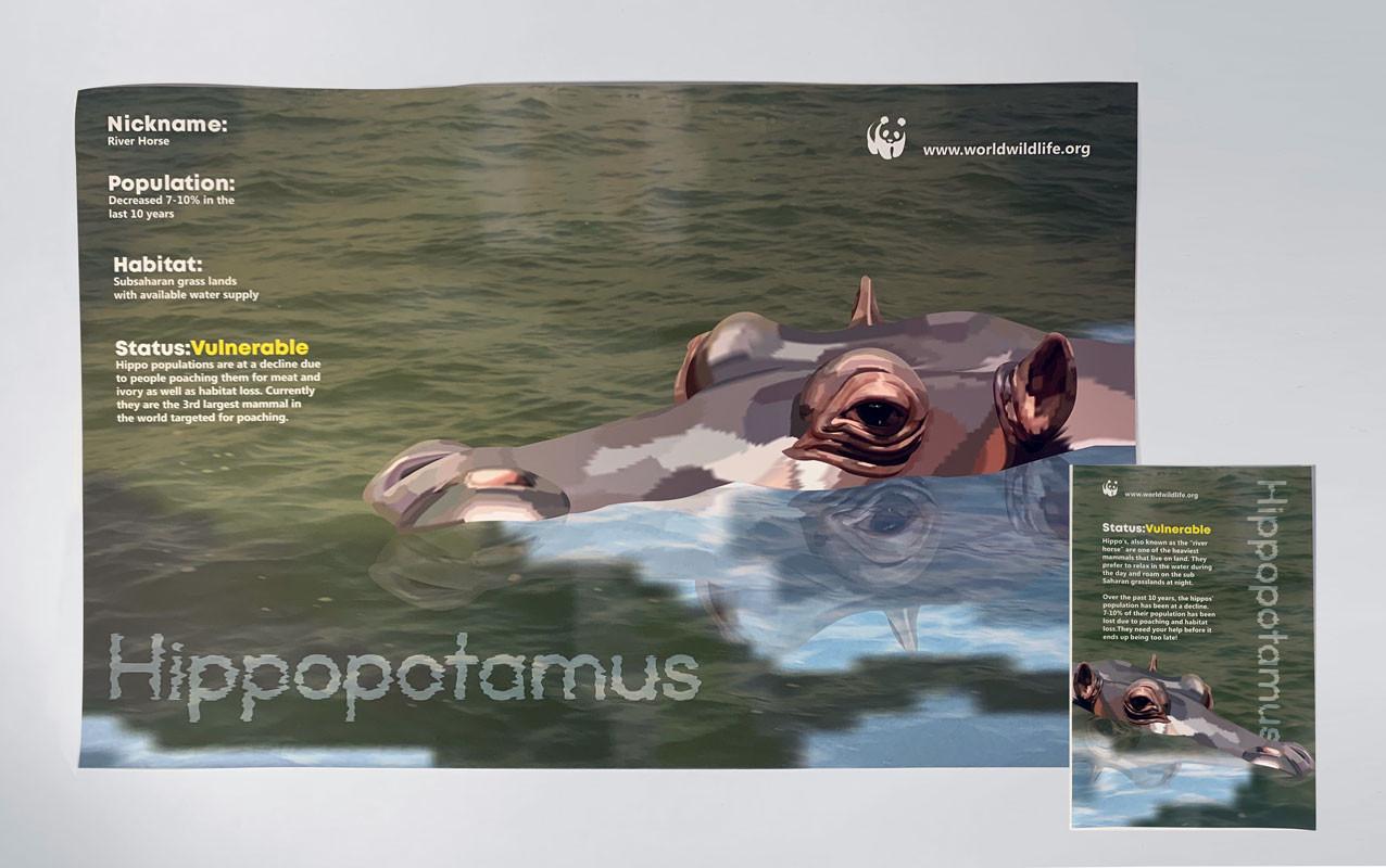 Hippopotamus, Brianna LaPorta