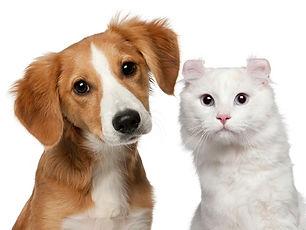 Dog and Cat pet urine