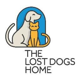 lost dogs.jpeg