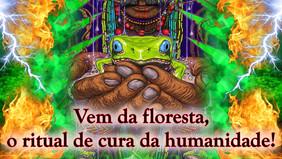 Vem da floresta o carnaval da onça negra