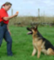 The-Dog-Trainer-6.jpg
