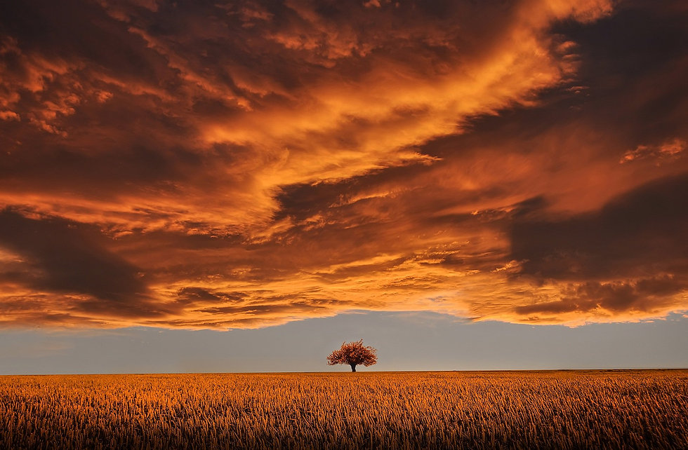 tree-736875.jpg