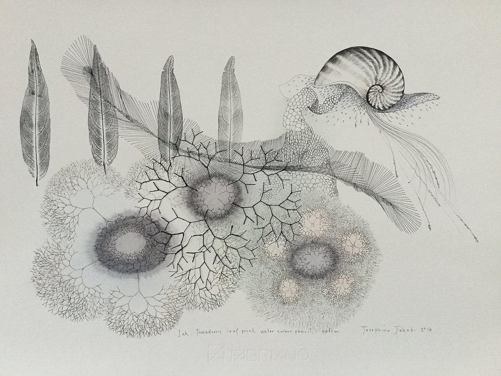 Artist Insight | Josephine Jakobi East Gippsland Art Gallery