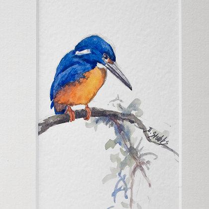 Dawn Stubbs | Kingfisher