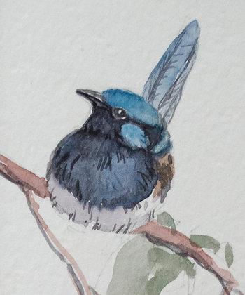 Dawn Stubbs | Blue Wren #2