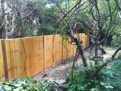 Toolshed Fence