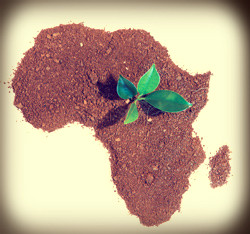 new africa 2