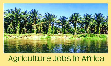 Agriculture Jobs in Africa | CA Global Headhunters