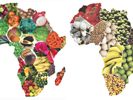 Agriculture in Africa, the largest economic sector