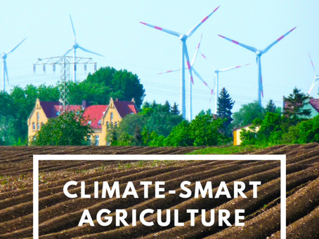 Climate Smart Agriculture in Africa