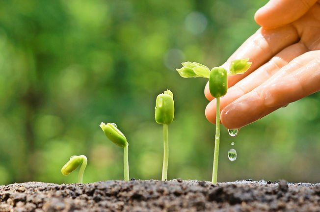 Agriculture. Growing plants. Plant seedl