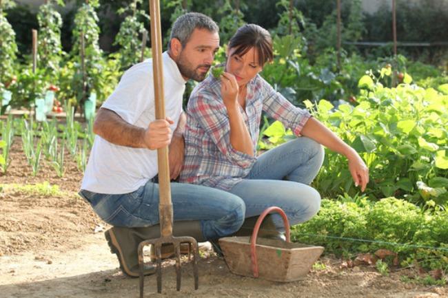 natural-pesticide-for-organic-vegetable-garden.jpg