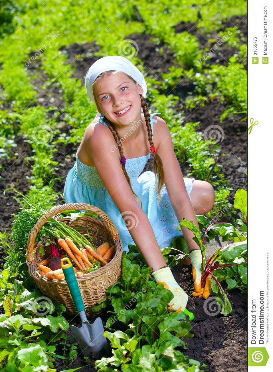 gardening-girl-vegetable-garden-little-gardener-collects-vegetables-basket-organ