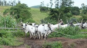 2 farmers killed after clash with herders in Nasarawa