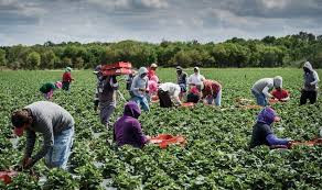 2,000 farmers affected by Boko  Haram to receive fertilizer aid from Adamawa govt.