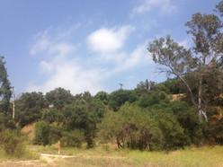 Lower Arroyo Seco 4149.jpg